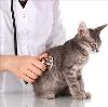 Ветеринарные клиники в Стародубе